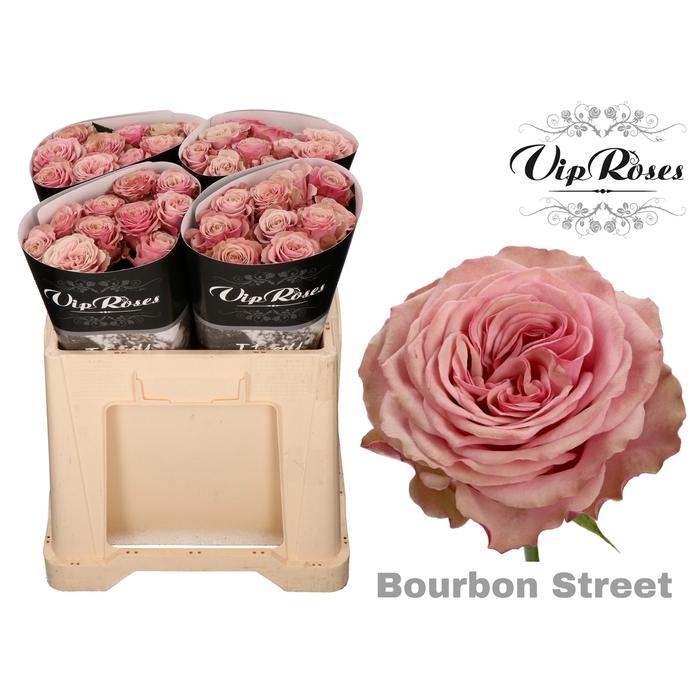 <h4>R GR BOURBON STREET</h4>