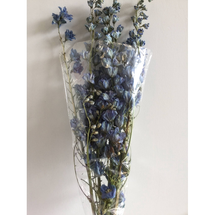 <h4>DRIED FLOWERS - DELPHINIUM GROOTBL. BLAUW 5 TAK 70CM</h4>