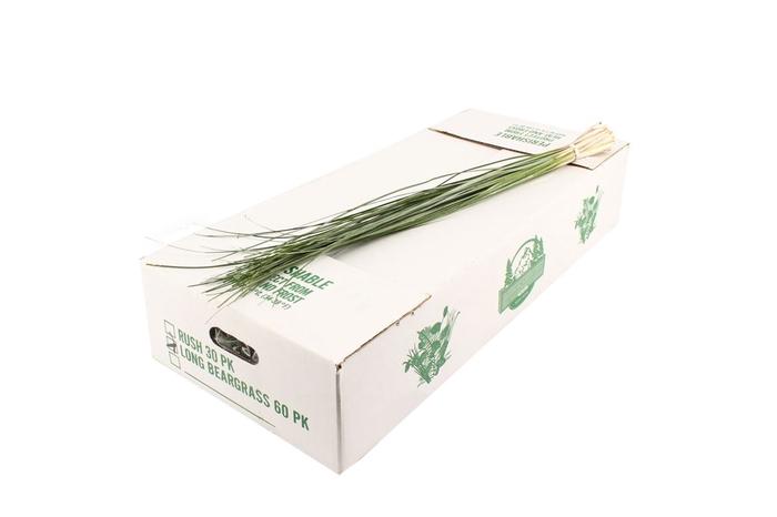 <h4>Beargrass Large</h4>