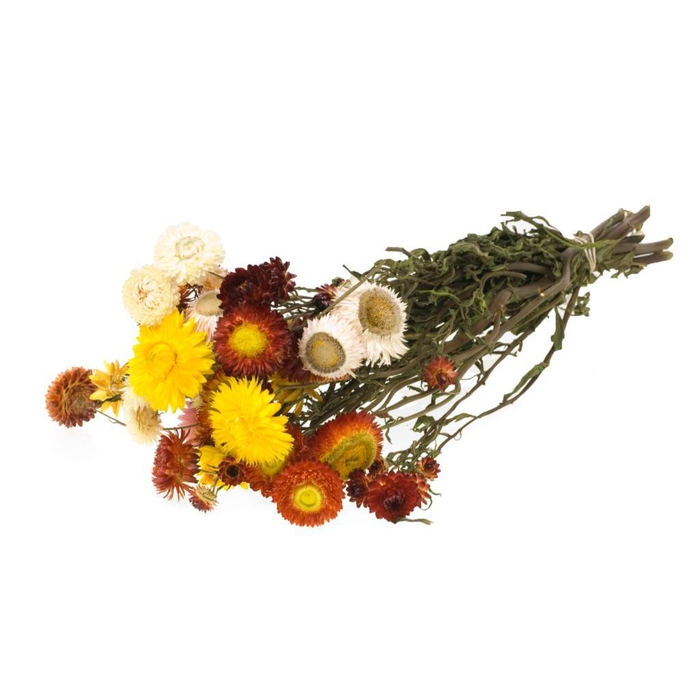 <h4>Helichrysum mixed</h4>