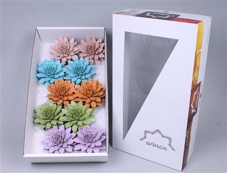 <h4>Echeveria Paint Pastel Mix (wincx) Cutfl</h4>