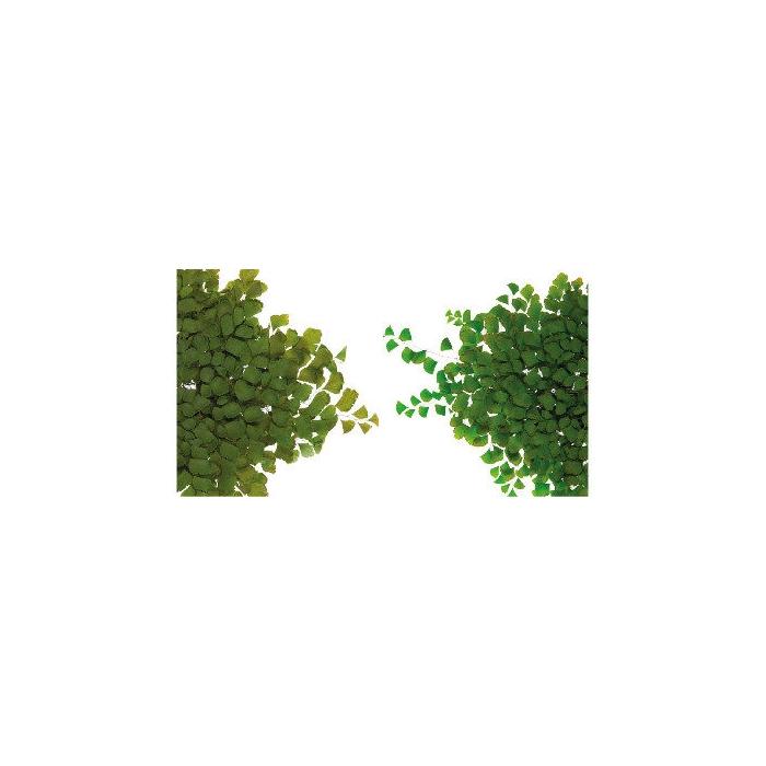 <h4>Fern Adiantum small FAD/9102</h4>