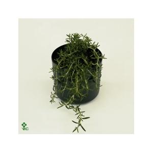 Florabella potgrond