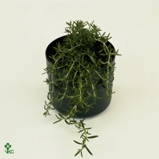 <h4>Florabella potgrond</h4>
