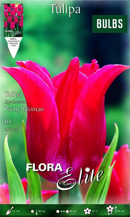 <h4>Z Tulipa Pretty Woman</h4>
