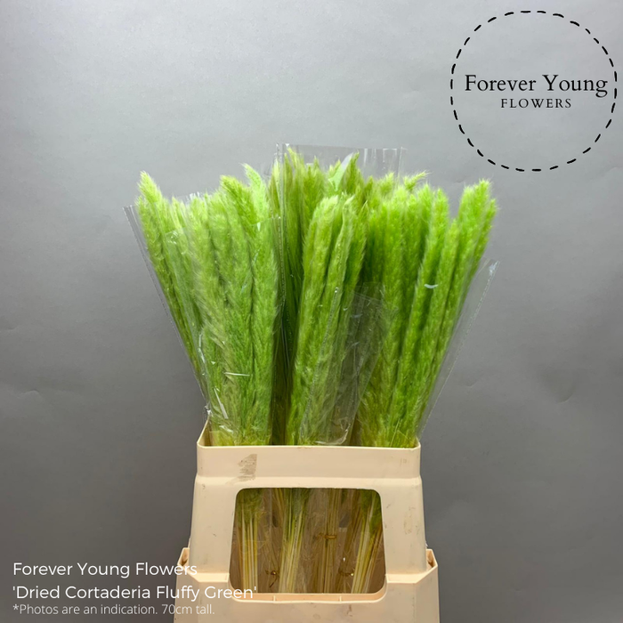 <h4>Dried Cortaderia Fluffy Green</h4>