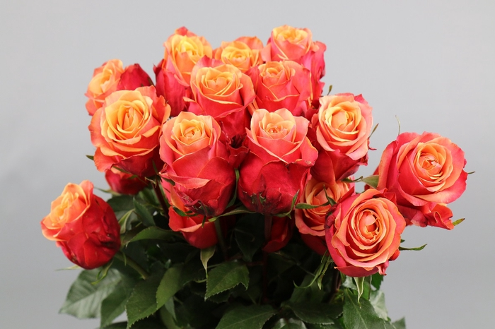 <h4>Rosa Ec Cherry Brandy</h4>