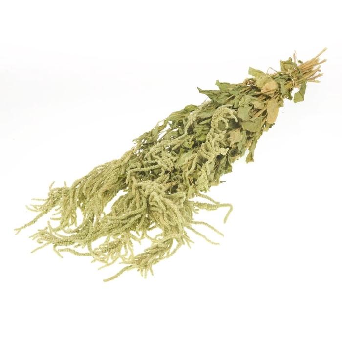<h4>Amaranthus caud nat green</h4>