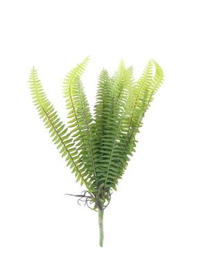 <h4>Af Fern Forest 30cm</h4>