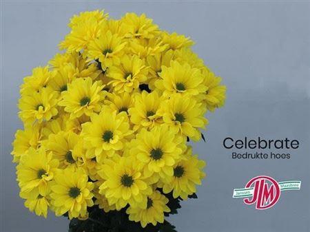 <h4>Chr T Celebrate</h4>