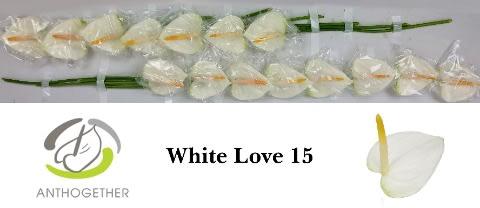 <h4>ANTH A WHITE LOVE 15.</h4>
