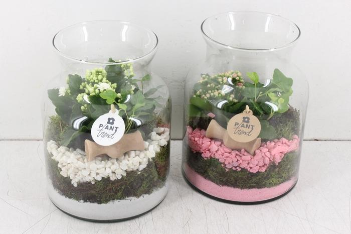 <h4>arr. PL - Glas bose hoog - roze/wit</h4>