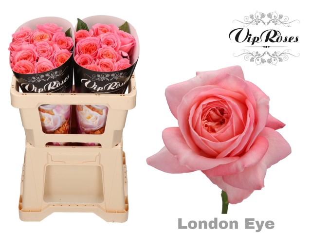 <h4>R GR LONDON EYE</h4>