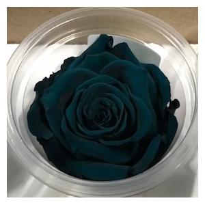 Rose stab. L gre-03