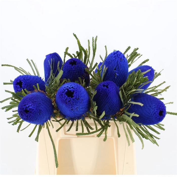 <h4>Banksia Hookeriana Blue</h4>
