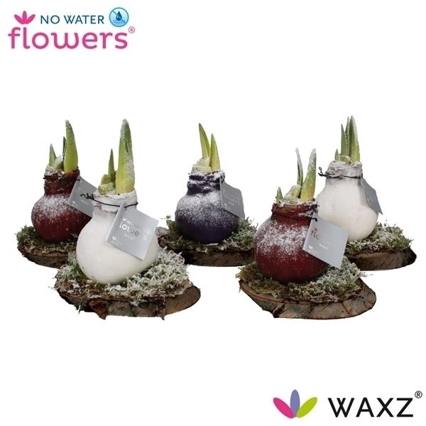 <h4>No Water Flowers Waxz® on Wood Snow</h4>