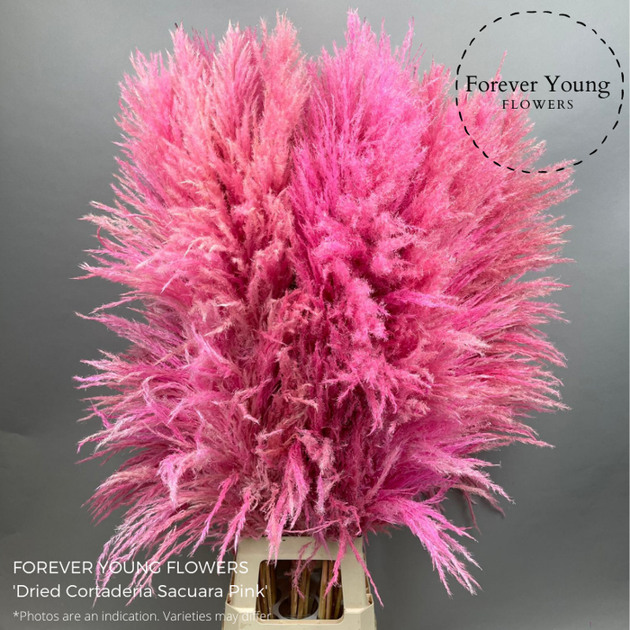 <h4>Dried Cortaderia Sacuara Pink</h4>