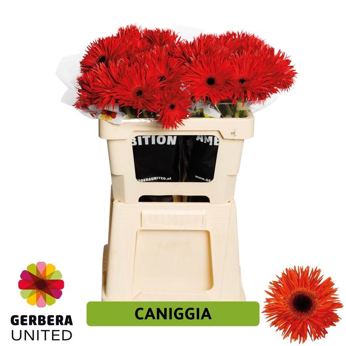 <h4>GE GR Caniggia water</h4>