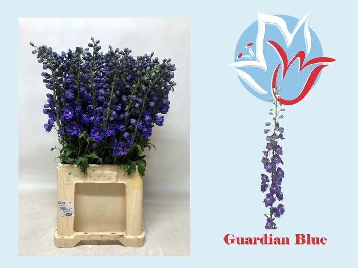 <h4>DELPH EL GUARD BLUE</h4>