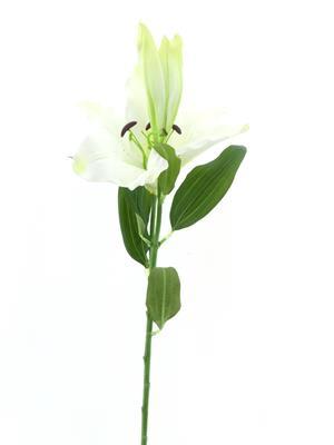 <h4>Af Lily White</h4>