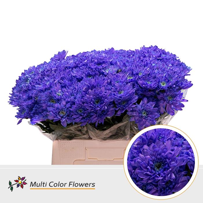 <h4>Chr. Euro  wit Violet Donker</h4>