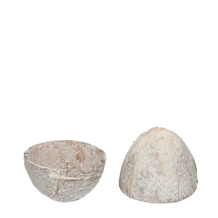 <h4>Droogvrucht Kokosnoot open 12cm x10</h4>