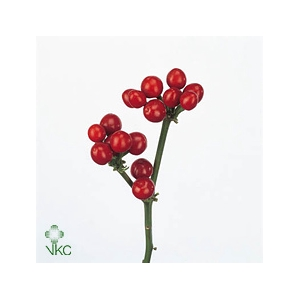 CILIEGE ROSSE 500GR