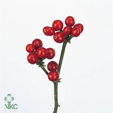 <h4>CILIEGE ROSSE 500GR</h4>