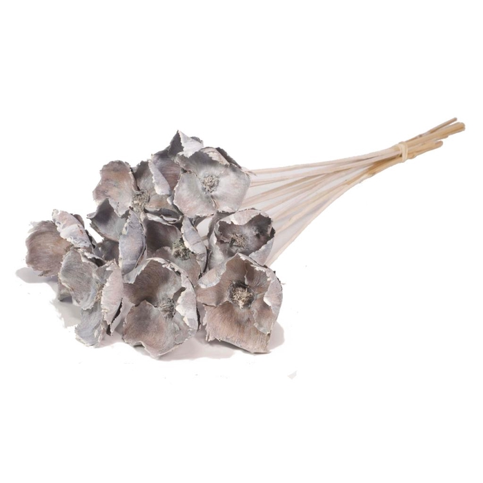 <h4>DRIED FLOWERS - PALMCUP ON STEM WHITE WASH 10pcs</h4>