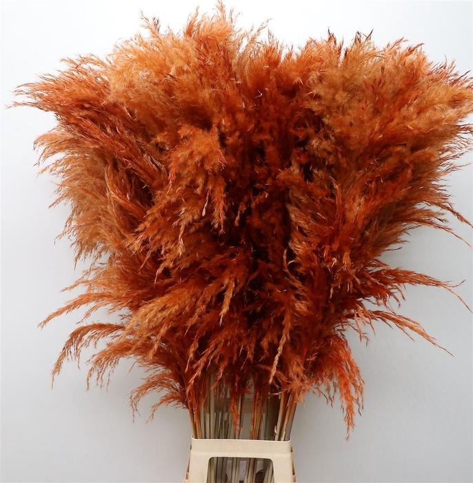 <h4>Corta Dried Brown 120cm</h4>
