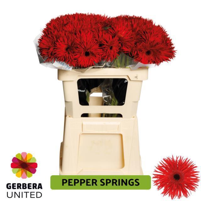 <h4>GE GS PEPPER SPRINGS</h4>
