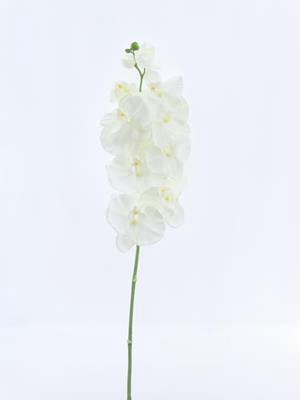 <h4>Af Phalaenopsis Orchid  Spray</h4>