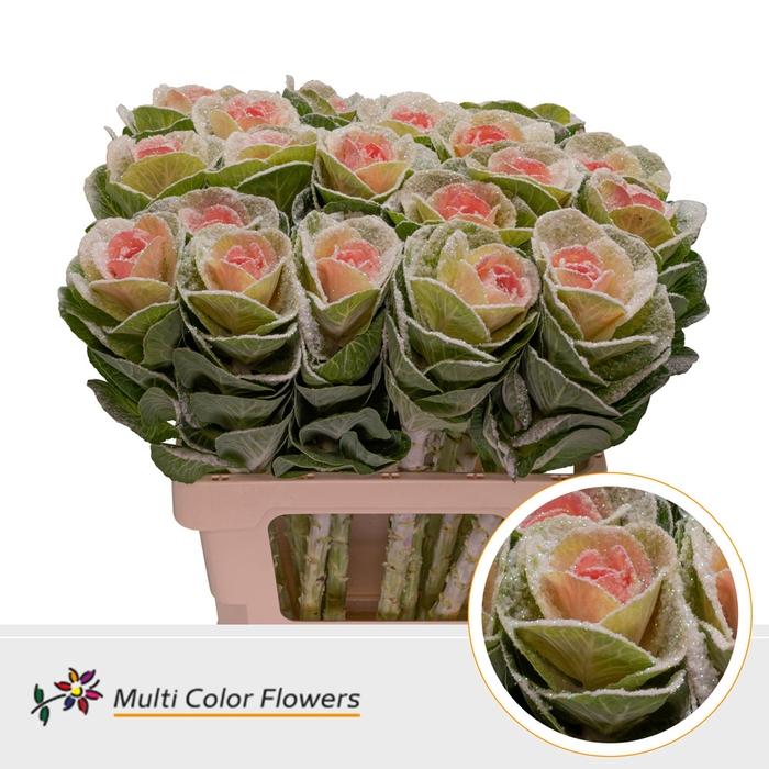 <h4>Brassica Naturel Hart Rose . MarshM</h4>