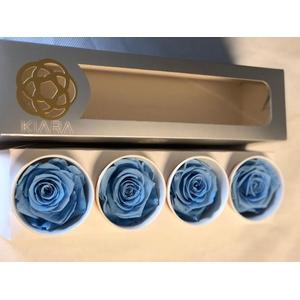 Super Rose Baby Blue (4)