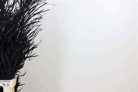 <h4>Dec Grevilea Black</h4>