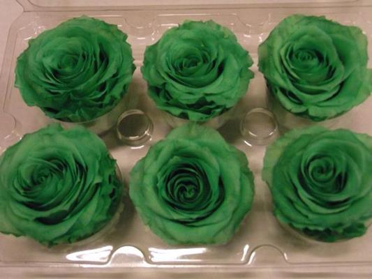 <h4>R Prs Apple Green</h4>