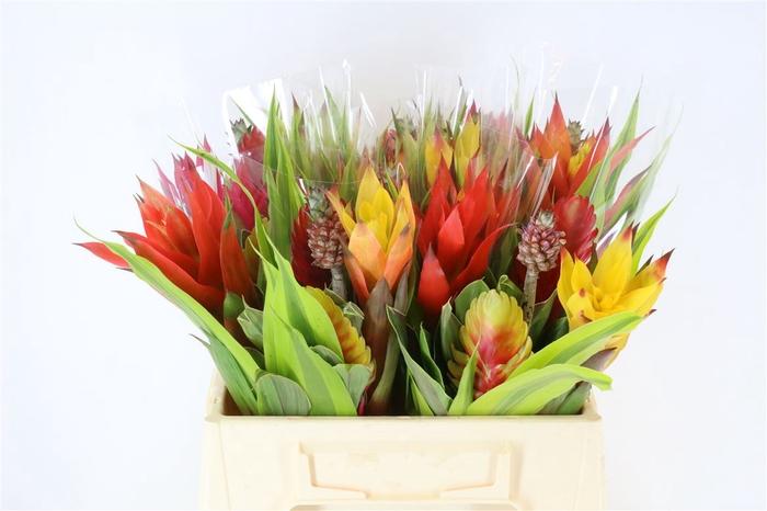 <h4>Bromelia Bouquet L</h4>