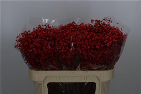<h4>Gyps Klbh Xlence Red</h4>