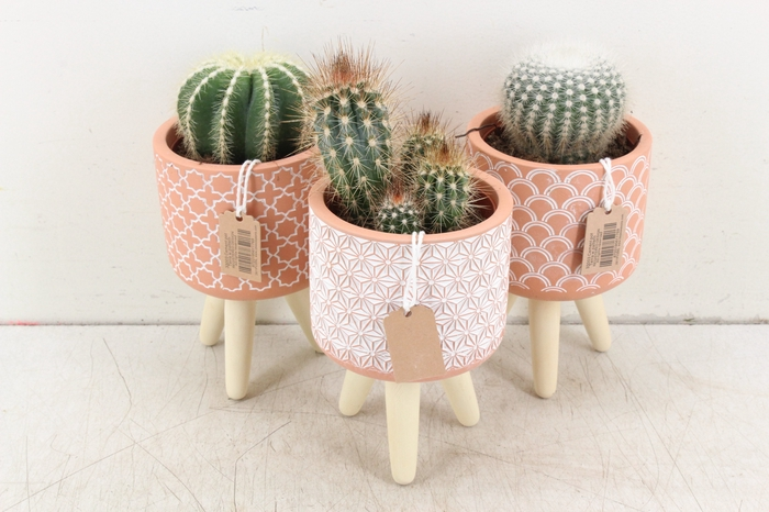 <h4>arr. UB Cactus - Terra cotta op pootjes L</h4>
