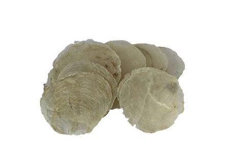 <h4>Basic Shell Capiz 200gr</h4>