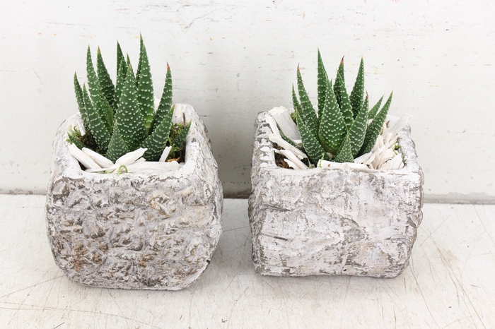 <h4>arr. SN - Planter beton 4kant kl.</h4>