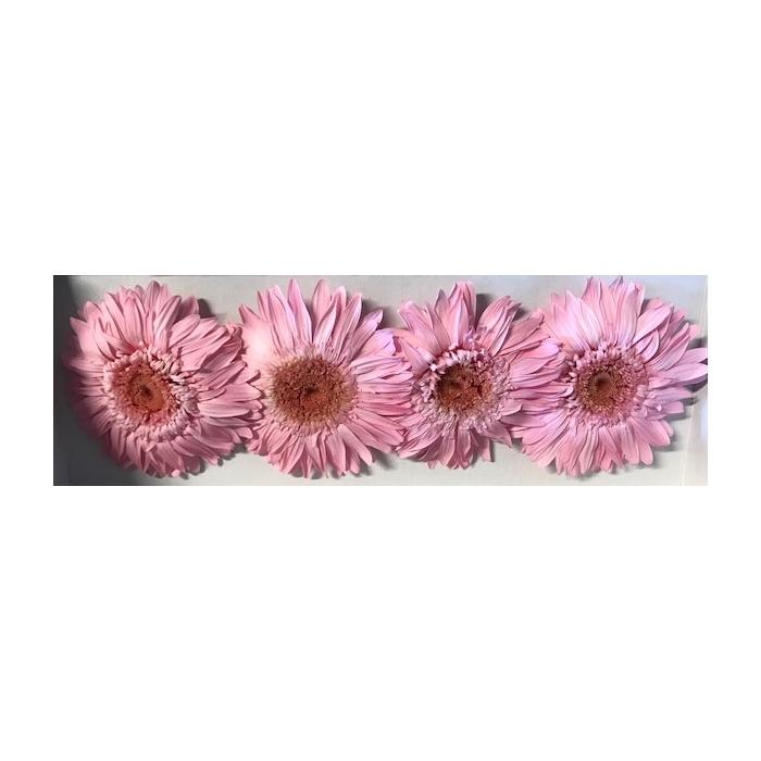 <h4>Gerbera roze stab.</h4>