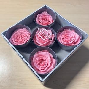 Roos Queen pastel roze