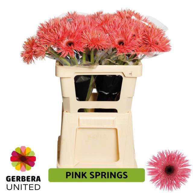 <h4>GE GS PINK SPRINGS</h4>