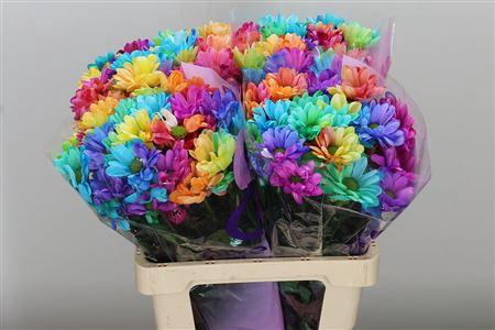 <h4>Chr T Dyed Chic Rainbow</h4>