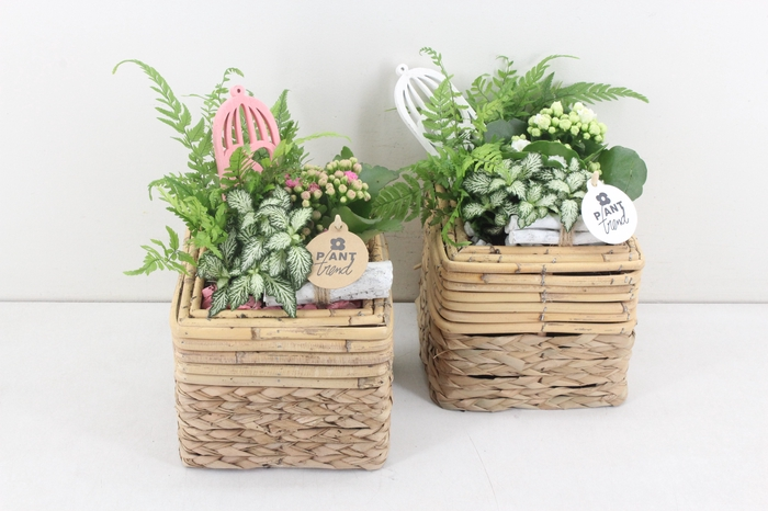 <h4>arr. PL - Bamboe 4kant - roze/wit</h4>