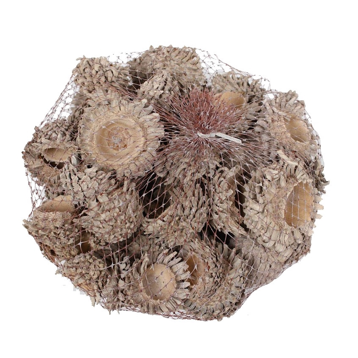 <h4>Acorn Cones 500gram in net frosted white </h4>