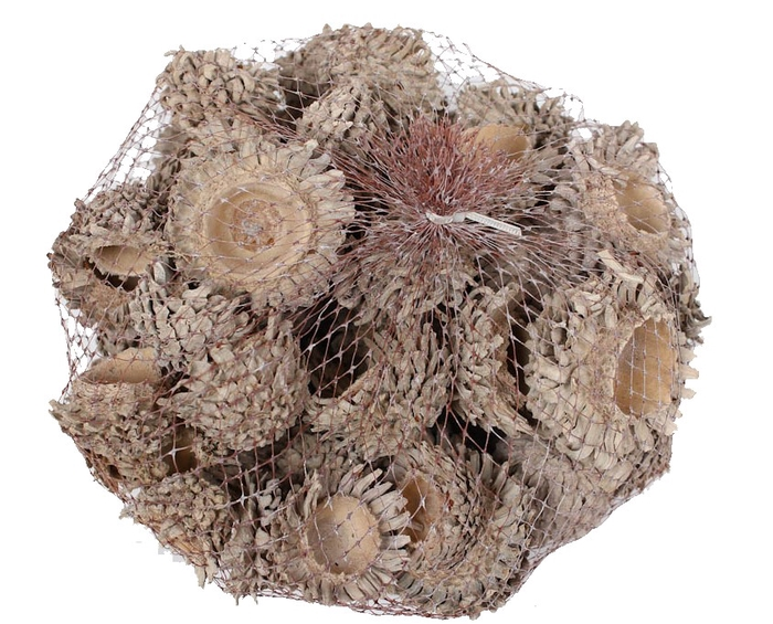 <h4>Acorn Cones 500gram in net frosted white</h4>