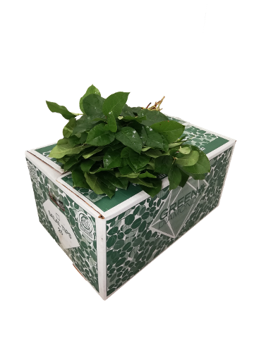 <h4>SALAL  TIPS  GREEN DIAMOND</h4>