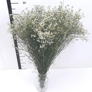 Limonio sinensis blanco